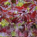 Tn Fall Water by Ericamaxine Price