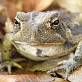 Toad by Lainie Wrightson
