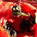 Tomato Creature by Janice Robertson