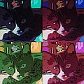 Toonces In Quad by Rob Hans