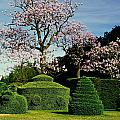 Topiary Garden In Spring by Sally Weigand