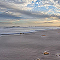 Topsail Living  by Betsy Knapp