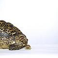 Tortoise Love by Shaun Higson