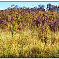 Touch Of Purple In October by Joan  Minchak