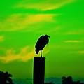 Toxic Sunset by Lynda Dawson-Youngclaus