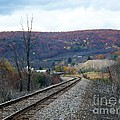 Tracks In The Valley by Christian Mattison
