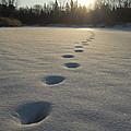Tracks Into The Sunrise by Kent Lorentzen