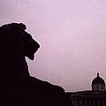 Lion Of London by Shaun Higson