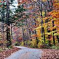 Trail Enlightenment by Art Dingo