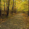 Trail Scene Autumn Abstract 1 by John Brueske
