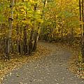 Trail Scene Autumn Abstract 3 by John Brueske
