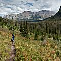 Trail Through Bear Country by Greg Nyquist