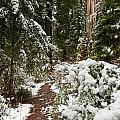 Trail Through Snow-decked Redwood Grove by Greg Nyquist