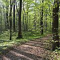Trail Through Spring Forest Bavaria by Konrad Wothe