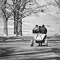 Transportation by Gabriela Insuratelu