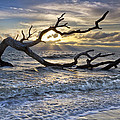 Treasures Of The Sea by Debra and Dave Vanderlaan
