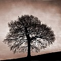 Tree Against A Stormy Sky by Chris Upton