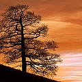 Tree Against A Sunset Sky by Chris Upton
