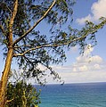 Tree And A Tropical Beach by John Greaves