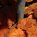 Tree And Pumpkin-like Leaves by Mike Nellums