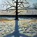 Tree And Shadow Calke Abbey Derbyshire by Andrew Macara