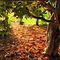 Tree And Shadows by Joan  Minchak