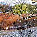 Tree And Tire Swing In Winter by Duane McCullough