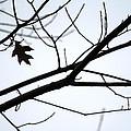 Tree Art Two by Wanda Brandon