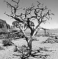 Tree At Cedar Ridge Bw by Julie Niemela