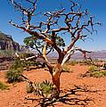 Tree At Cedar Ridge by Julie Niemela