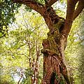 Tree At Killarny Forest by Merrill Miller