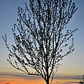 Tree At Sunset by Wayne King