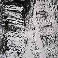 Tree Bark IIi by Sarah Kemp