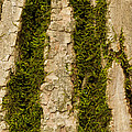 Tree Bark Mossy 4 C by John Brueske