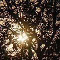 Tree by Beto Machado