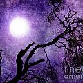Tree Branch In Purple Moonlight by Laura Iverson