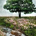 Tree By Stream by Jill Battaglia