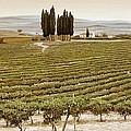 Tree Circle - Tuscany  by Trevor Neal