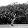 Tree Dancer by Shelley Blair