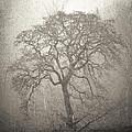 Tree Fog by Steve McKinzie