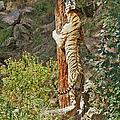 Tree Hugger by Ernie Echols
