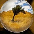 Tree In A Field Through A Glass Eye by Robert Woodward