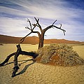Tree In Desert by Darwin Wiggett