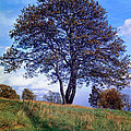 Tree In  English Park by Daniel Blatt