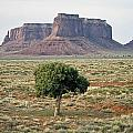 Tree In Monument Valley by Luc Novovitch