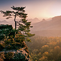 Tree In Morning Llght In Saxon Switzerland by Andreas Wonisch