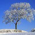 Tree In Winter, Co Down, Ireland by The Irish Image Collection