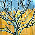 Tree In Winter by Debbie Sikes