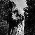 Tree Key Hole 1 by April  Julian
