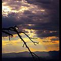 Tree Limb In Sunset by Susanne Still
